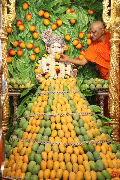 His Divine Holiness Acharya Swamishree Maharaj offers delicious mango to Lord Shree Swaminarayan
