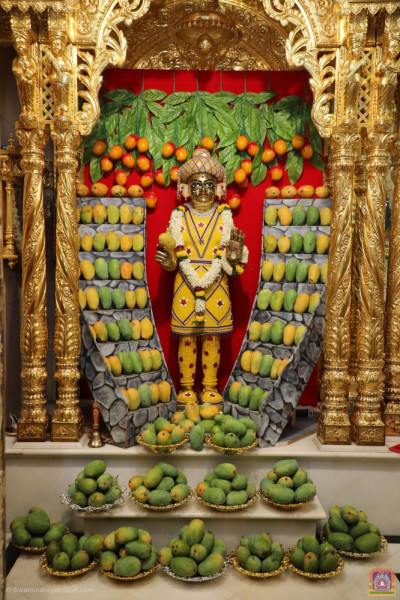 Divine darshan of Shree Harikrishna Maharaj with mountains of mangos